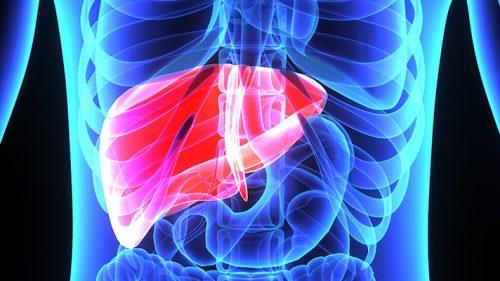 تأثیر کبد چرب در مقاومت محیطی نسبت به انسولین